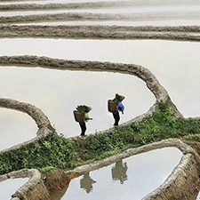 Rice_fields)225X225.jpg