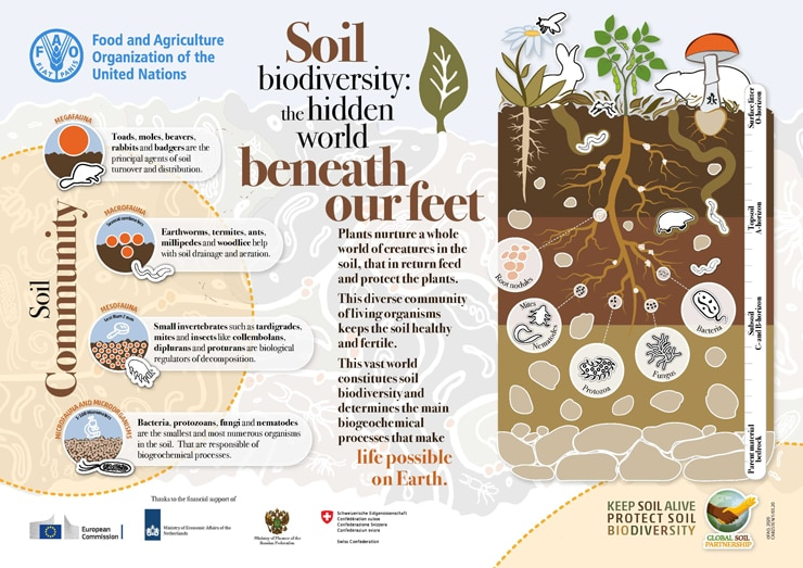 fao_global-soil-partnership_soil-biodiversity-infographic-740.jpg